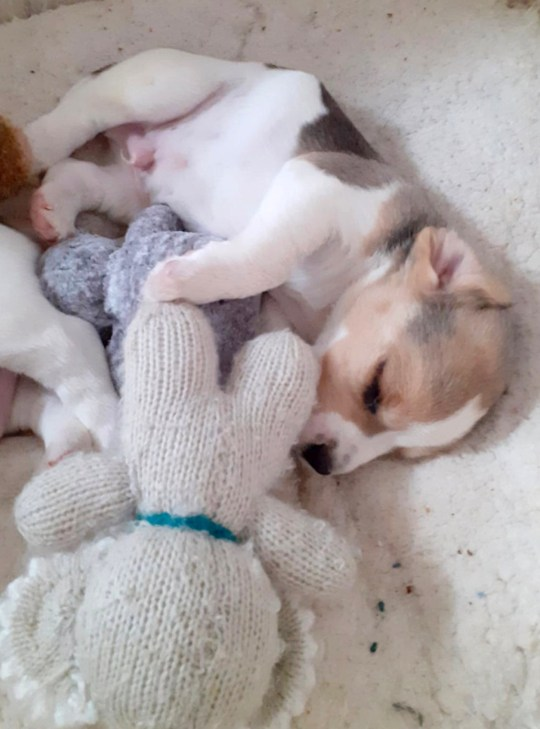 a puppy cuddling a soft toy