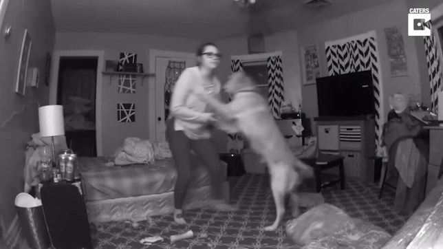 Dog prevents tipsy owner from being self-yeeted