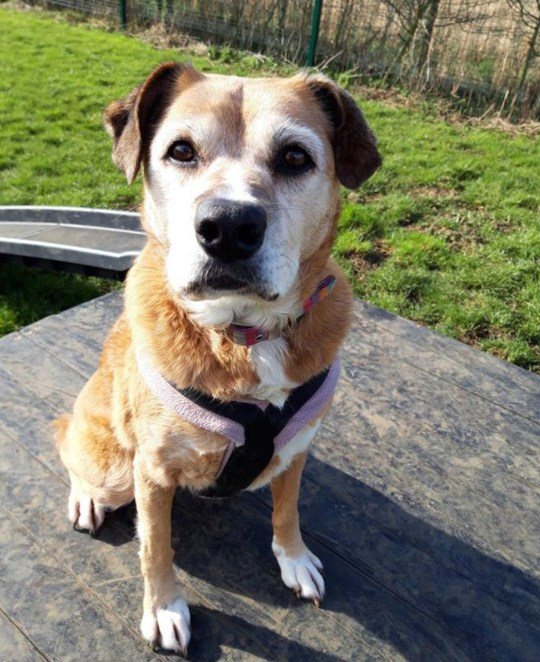 Will someone please take this dog https://www.dogstrust.org.uk/rehoming/dogs/dog/1051378/molly Picture: Dogs Trust