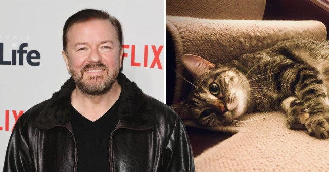 Ricky Gervais and Jane Fallon fostering an adorable cat months after the death of their beloved Ollie Pics: Getty/Jane Fallon/Twitter