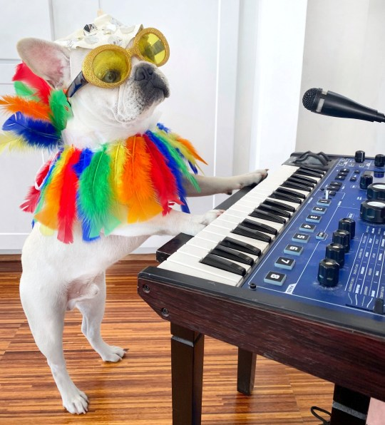 Toadthe dog dressed as elton john