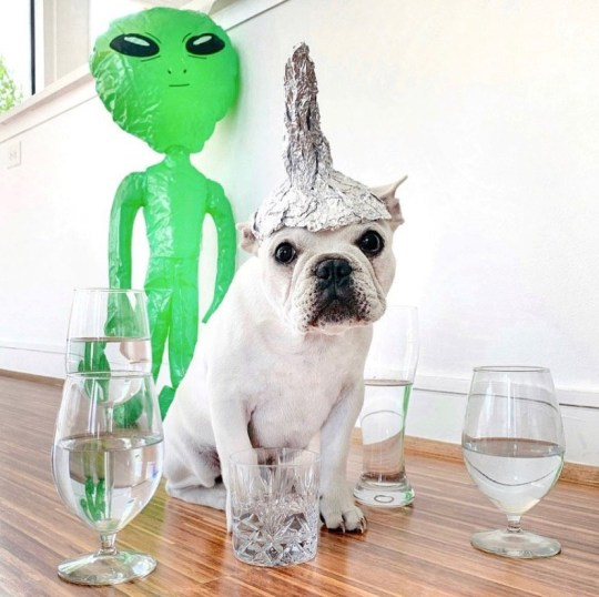 Toad the dog with a fake alien as in the film signs