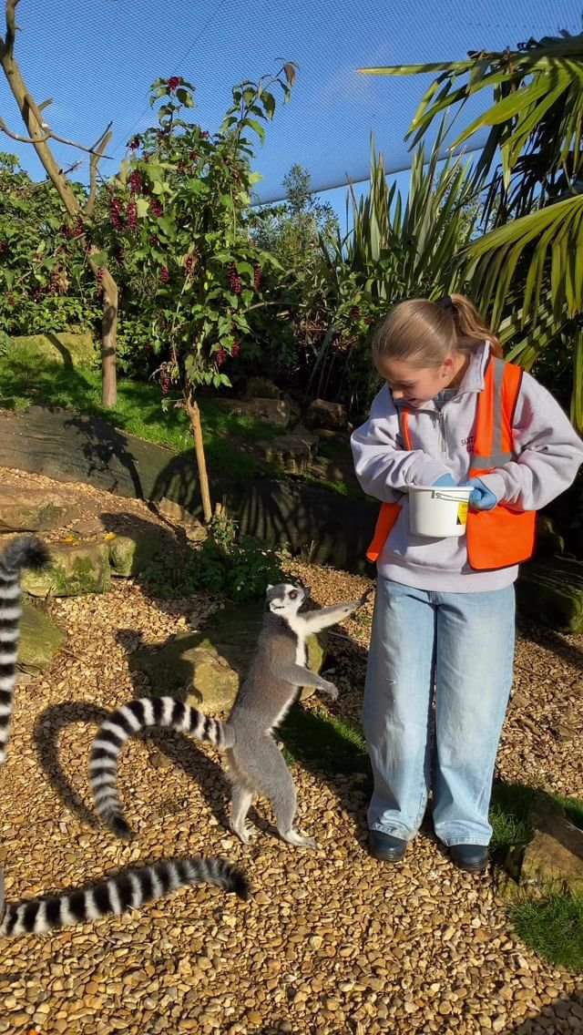 David and Harper Beckham feeding animals at the zoo