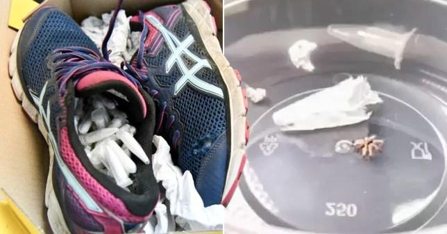 119 tarantulas smuggled through manila airport in pair of old trainers