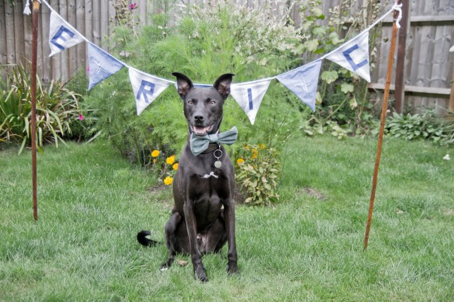 Blue Cross appeals for home for pup who's spent almost a full year at a shelter