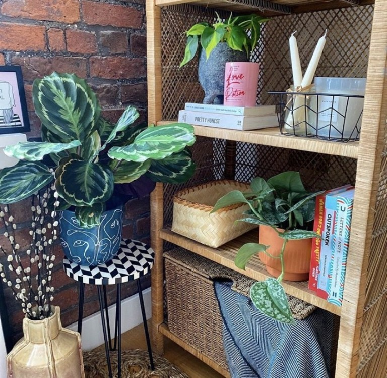 what i rent: Cara and Nat, new islington, manchester - shelves in the living room, complete with plants and books