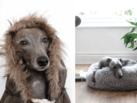 Aldi launches adorable winter range for pets – including cosy parka