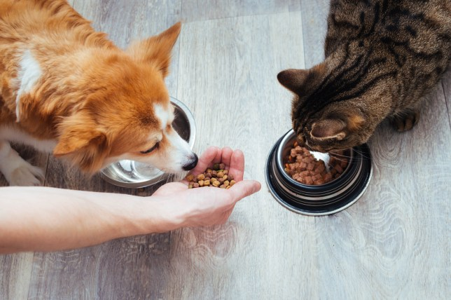 owner pours dry food to the cat and dog in the kitchen. Master's hand. Close-up. Concept dry food for animals