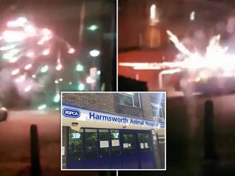 Animal hospital pelted with fireworks terrifying dogs and cats inside