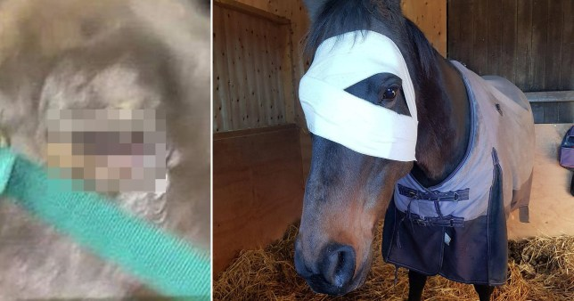 Horse hit in eye by firework may have to be put down