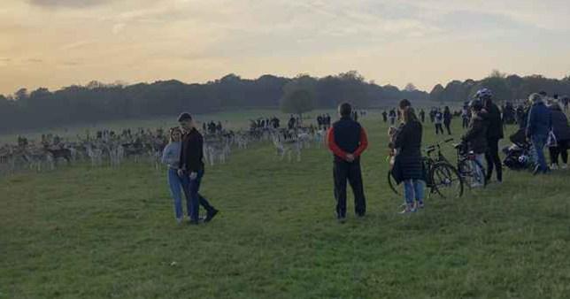 Crowds of people surrounding deer in park