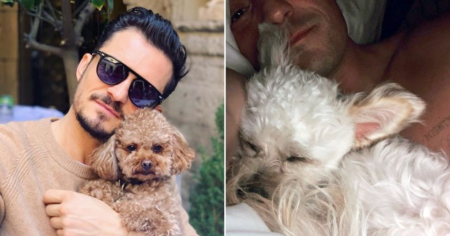 Orlando Bloom pictured with dog Mighty and new puppy Buddy