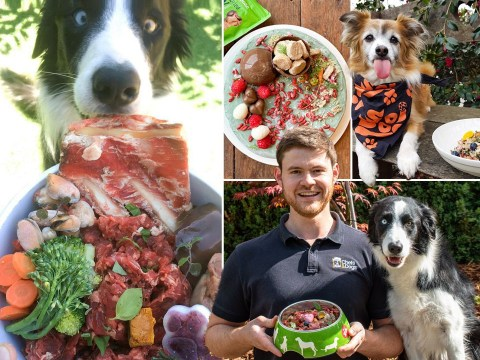 Chef whips up Michelin-style dishes for his dogs every day – at a cost of £3,400 every year