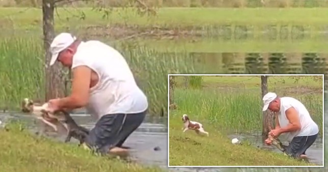 Richard Wilbank saving his puppy Gunner from an alligator.