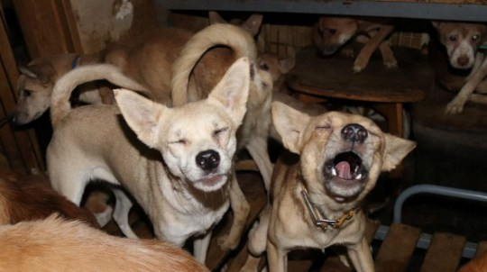 Dozens of dogs, the animal rights group say mostly malnourished and infected by parasites, are crammed inside a tiny house in Izumo, wetsern Japan October 19, 2020, in this handout image provided by an animal rights group Doubutukikin and obtained by Reuters on November 4, 2020. Picture taken October 19, 2020. Doubutukikin/Handout via REUTERS ATTENTION EDITORS - THIS IMAGE WAS PROVIDED BY A THIRD PARTY. EDITORIAL USE ONLY. NO RESALES. NO ARCHIVES. MANDATORY CREDIT.