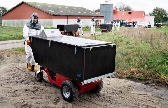 epa08798604 Des employés de l'Administration vétérinaire et alimentaire danoise et de l'Agence danoise de gestion des urgences dans l'équipement de protection ont commencé à tuer le vison dans une ferme à fourrure à Gjoel, Danemark, le 8 octobre 2020 (publié le 4 novembre 2020).  Des rapports du 4 novembre 2020 indiquent que le Danemark prévoit d'abattre tous les visons dans les fermes à fourrure de vison du pays pour contenir la propagation d'une mutation de coronavirus.  Une épidémie de Covid-19 dans des fermes de visons en octobre 2020 a donné lieu à des mesures similaires.  EPA / Henning Bagger DANEMARK OUT