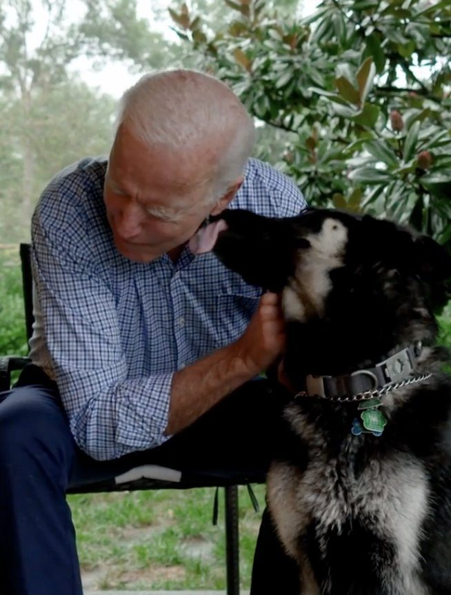First dogs Major and Champ will move into White House with Joe Biden