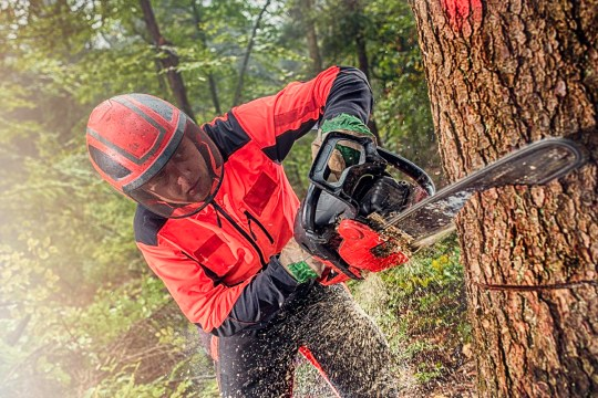 Chainsaws were invented for childbirth, not cutting wood Man using chainsaw while cutting tree in forest.