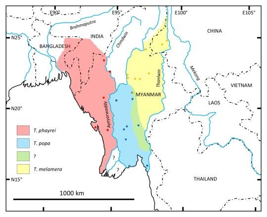 Répartition géographique du Popa langur (Trachypithecus popa) et des espèces apparentées Phayre ??? s langur (Trachypithecus phayrei) et Shan langur (Trachypithecus melamera).  Les points indiquent l'origine des échantillons utilisés dans cette étude.