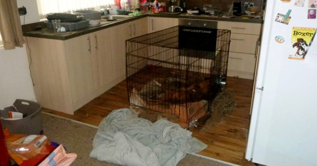 The dogs were kept in a crate in the kitchen, just metres for full bags of food