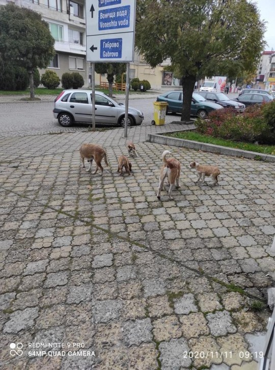 Hundreds of dogs face a cruel death on the streets of Bulgaria after a ban on groups of animals crossing the Channel