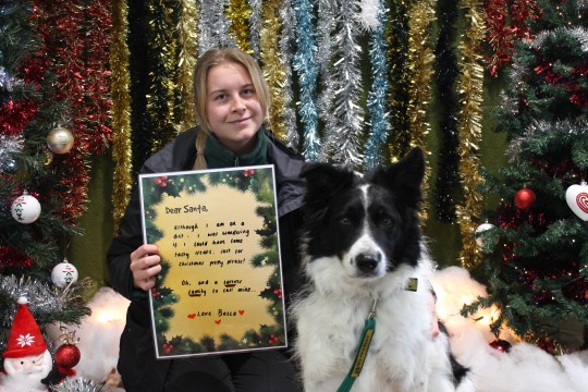 Bosco the Collie with his carer and Christmas letter