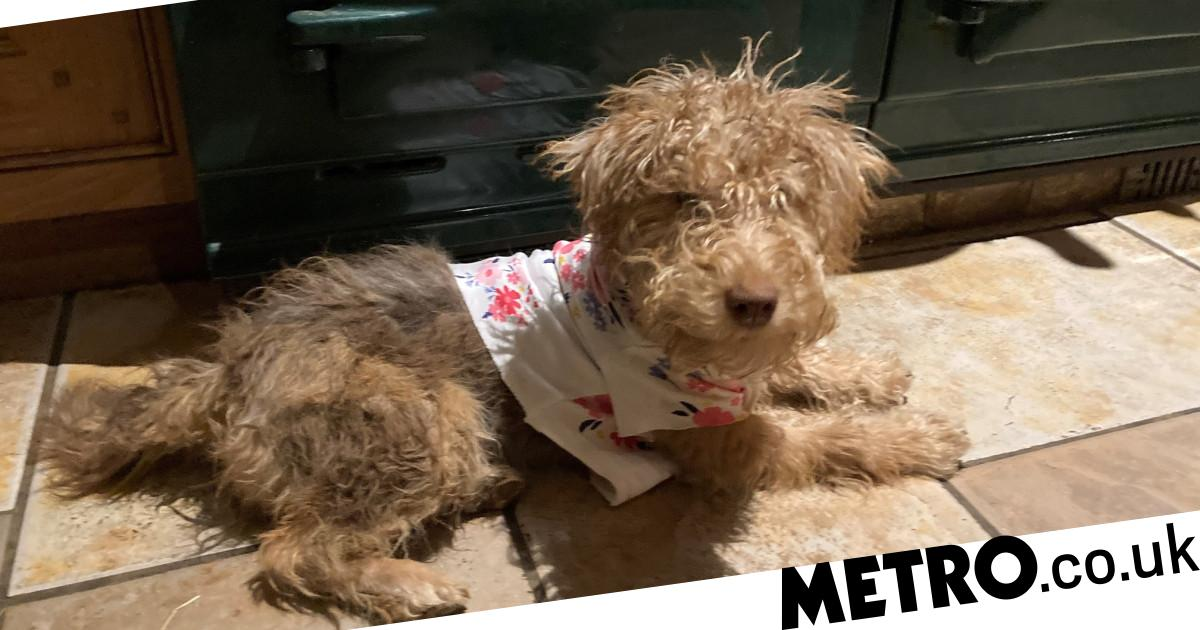 Puppy suffers horrific burns as vets warn to keep pets out of kitchen