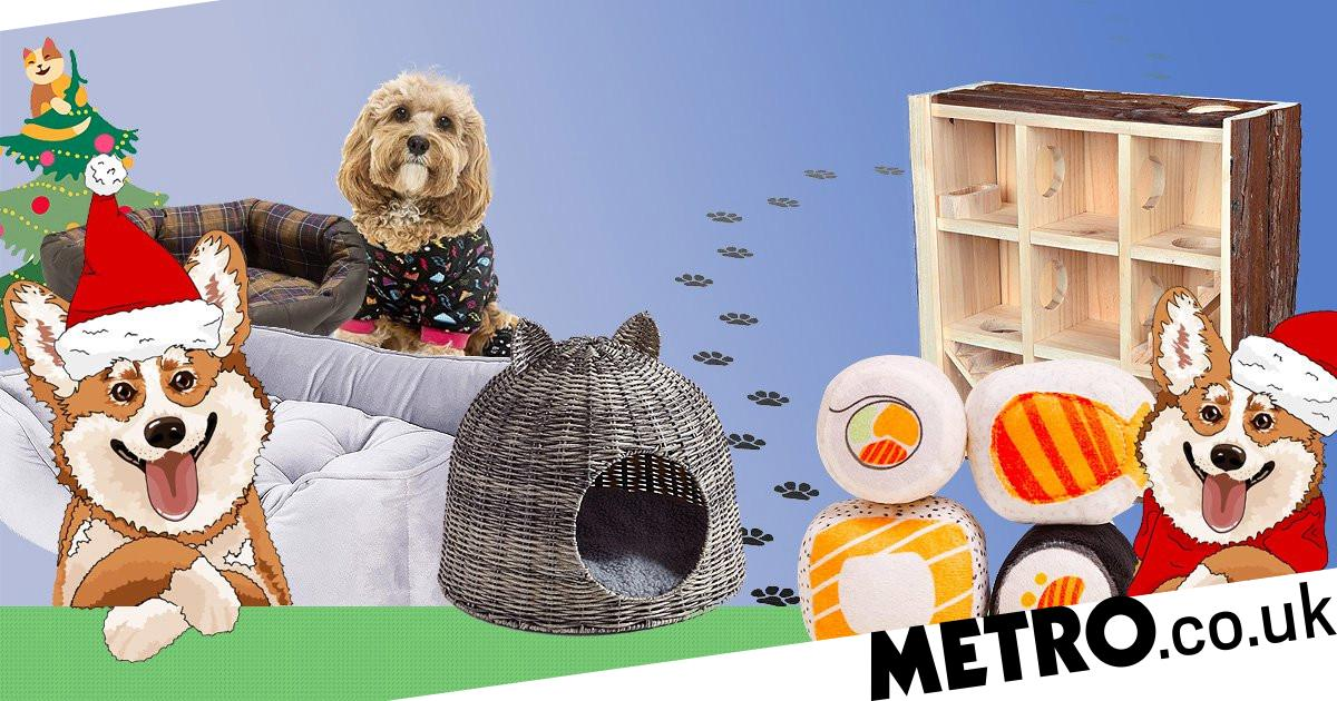 12 of the best Christmas gifts for pets