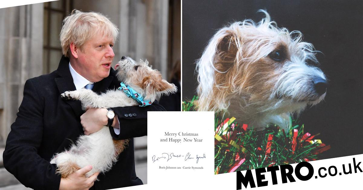 Downing Street dog Dilyn centre stage as he stars on PM's Christmas card