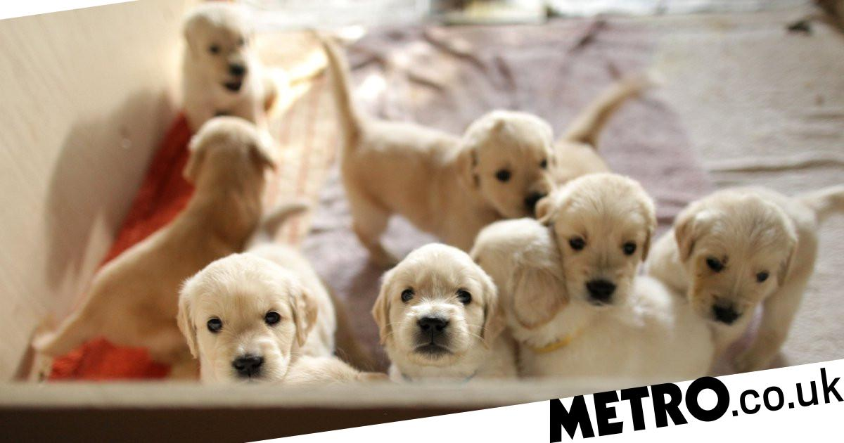 BBC defends dog breeding documentary as petition reaches 24,000