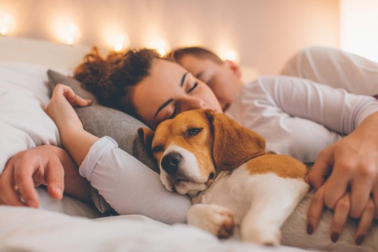 Young couple relaxing on the bed with their pet dog