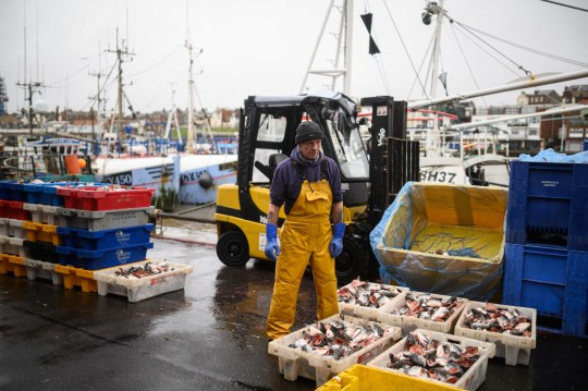 Fishermen sort and load trays of salmon heads to be used as bait for crab and lobster pots as they prepare for their next voyage to sea, on the South Pier of Bridlington Harbour fishing port in Bridlington, north east England on December 11, 2020. - A Brexit trade deal between Britain and the European Union looked to be hanging in the balance on Friday, after leaders on both sides of the Channel gave a gloomy assessment of progress in last-gasp talks. Trade talks between the UK and the EU continue in Brussels with EU members' future access to Britain's rich fishing waters remaining a major sticking point. (Photo by OLI SCARFF / AFP) (Photo by OLI SCARFF/AFP via Getty Images)