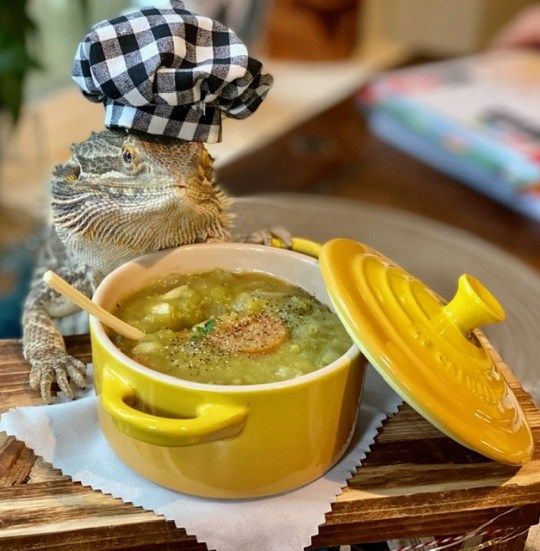 lenny the lizard with a tiny bowl of soup