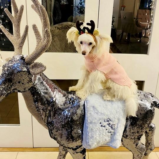 Fabio on a reindeer statue