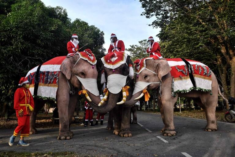 Les éléphants du palais des éléphants d'Ayutthaya, vêtus de costumes de père Noël et portant des masques faciaux, posent pour des photos avant l'événement pour distribuer des masques faciaux aux étudiants à l'extérieur de l'école Jirasat Wittaya dans la province centrale thaïlandaise d'Ayutthaya le 23 décembre 2020.