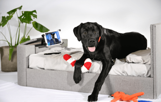 Bed company Time4Sleep releases range of luxury dog beds that match the human collection - from a cottagecore rattan bed to an ottoman bed for their toys