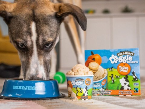 Ben & Jerry's is releasing a range of ice cream just for dogs
