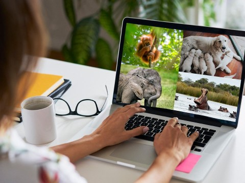 This website lets you watch live animal webcams from all over the world