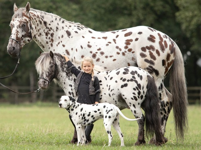 photo of a matching dog, horse, and pony who are friends