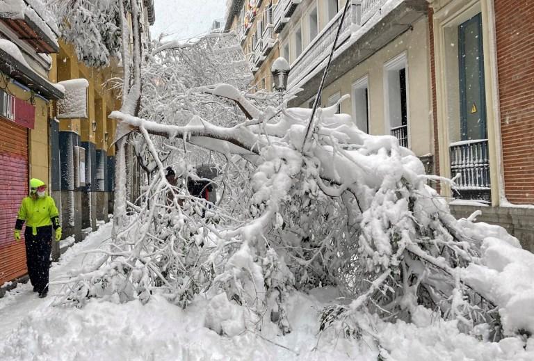 Un homme passe devant des arbres tombés dans une rue, lors d'une forte chute de neige dans le centre de Madrid, Espagne le 9 janvier 2021. REUTERS / Ingrid Melander TPX IMAGES DU JOUR