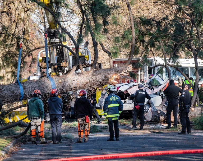 Crews remove a large ponderosa pine that fell on a vehicle, killing a woman during a windstorm Wednesday, Jan. 13, 2021 in Spokane, Wash. (Colin Mulvany/The Spokesman-Review via AP)