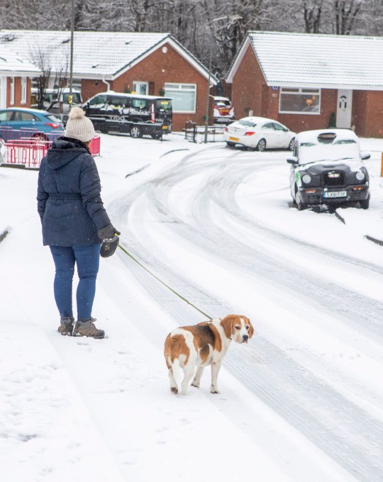Dog walker in Snow covered streets of Robroyston, East Dunbartonshire. Jan 14 2021