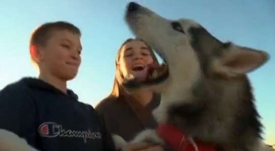 Lost husky howls with joy as he's reunited with family after months on streetsPicture: 3KSN