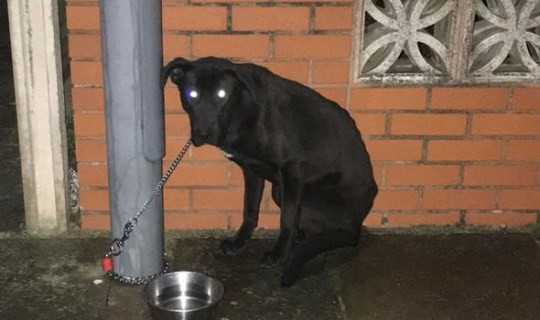 Dog left chained to Birmingham lamppost on freezing night finds new home