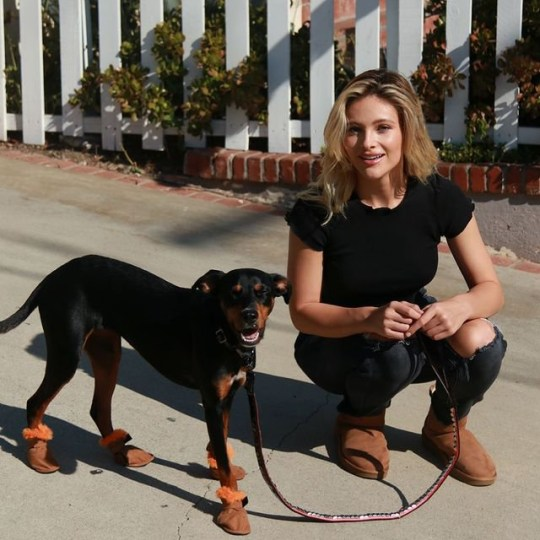 Luxury pet retailer creates £60 Ugg boots for dogs - Lovebylife