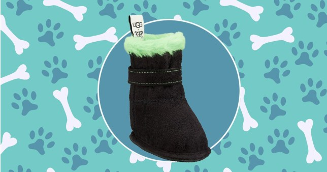 Tiny Ugg boots for dogs