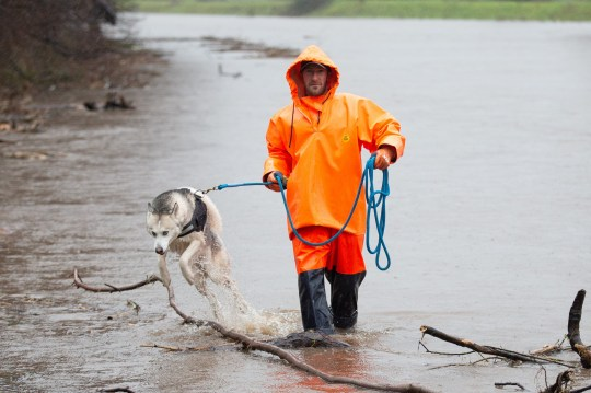 A man walks his dog through the River Mersey in Didsbury, Greater Manchester