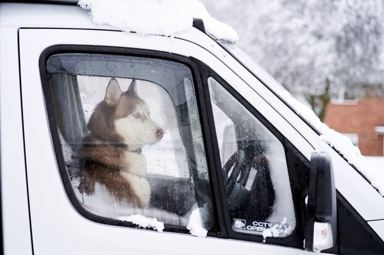 A husky dog looks out the windscreen from a camper van in Camberley. PA Photo. Picture date: Sunday January 24, 2021. Forecasters predict that the cold spell affecting much of the UK is due to continue, with temperatures expected to remain slightly below average into next week. Photo credit should read: John Walton/PA Wire