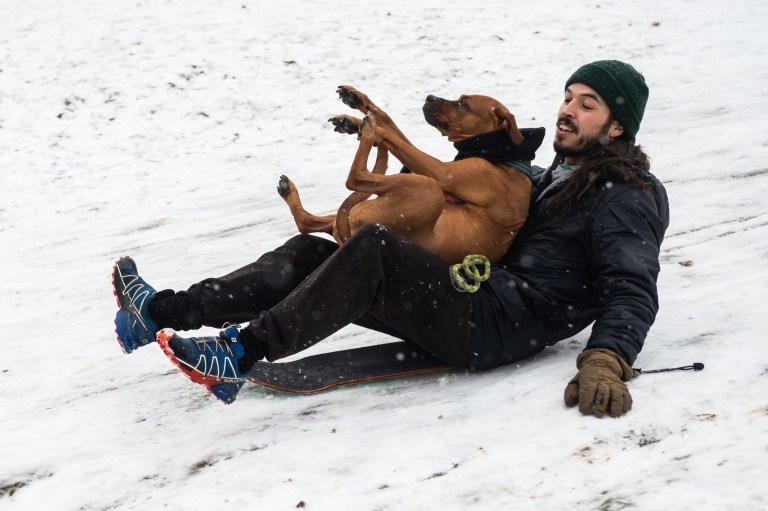 A man using a skateboard board snowboards with his dog down Primrose Hill, London, England, UK on Sunday 24 January, 2021 as snow finally hits London., Credit:Avalon / Avalon