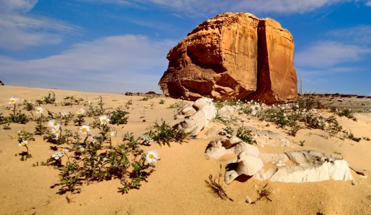 Split Rock (Nasla Rock), in desert of Tayma, Saudi Arabia (Shutterstock)